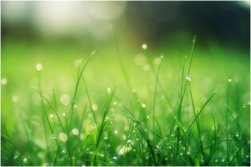How to mow the lawn in monsoon